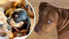 Perrita esconde a sus 9 cachorritos de su cruel dueño cavando una zanja hasta que llega la ayuda
