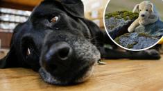 Foto de filhote de cachorro abandonado agarrado ao seu ursinho de pelúcia causa indignação nas redes