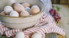 Pareja encuentra un huevo abandonado en su patio y ocurre un pequeño milagro