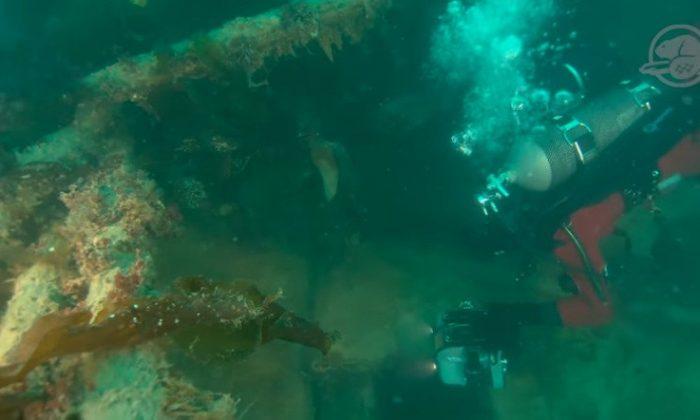 Un miembro del equipo de arqueología subacuática de Parks Canada explora los restos del HMS Terror. (Equipo de Arqueología Subacuática/Parques Canadá)