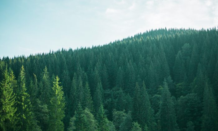 Imagen de archivo de un bosque. (Shutterstock)