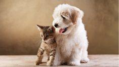 Cachorro se sentía solo en la tienda de mascotas hasta que un intrépido gatito hace algo al respecto