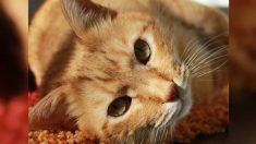 Le pide a su hijo que adopte un animal del refugio, su foto con el enorme gato elegido se vuelve viral