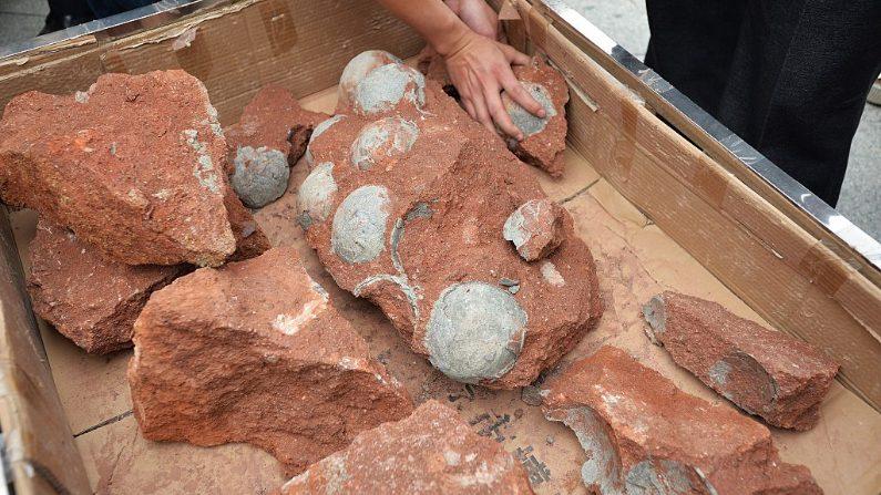 Huevos de dinosaurio encontrados en un sitio de construcción en Heyuan, en la provincia de Guangdong, en el sur de China. (STR/AFP/Getty Images)