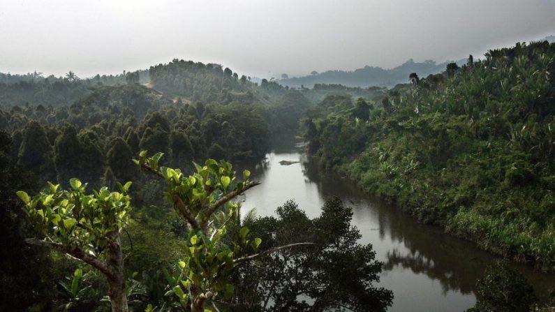 Región forestal cerca de la aldea de Andratamarna en Madagascar el 13 de diciembre de 2005. (Marco Longari/AFP/Getty Images)