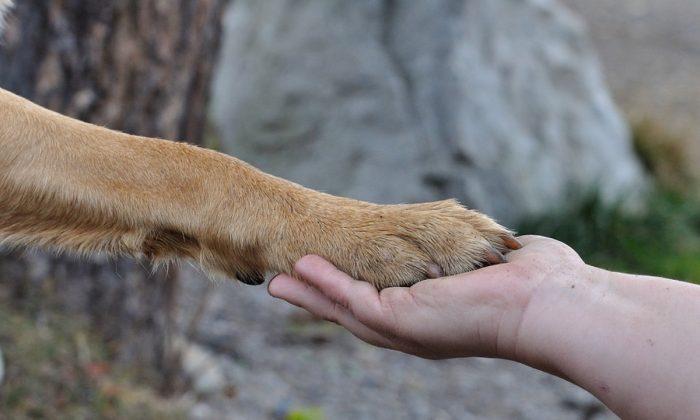 Imagen de archivo de la pata de un perro en contacto con la palma de la mano de un hombre. (Pezibear/Pixabay)