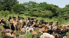 Turistas encuentran 34 perritos callejeros en una playa de México y deciden darles un nuevo hogar