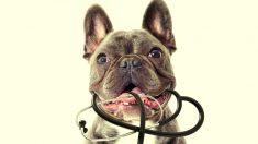 Los perros tienen olfato de médico y pueden detectar cuando algo huele mal en tu salud