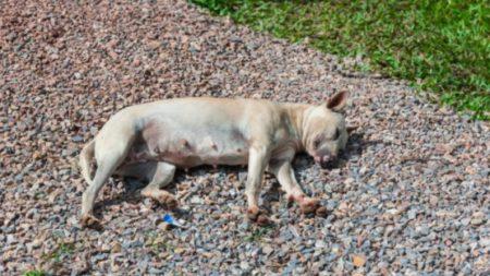 Un cachorro muere y tres quedan en estado crítico cuando su dueña los deja sin agua bajo el sol ardiente