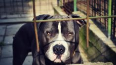 Niña de 9 años murió al ser fatalmente mutilada por 3 perros, y el dueño es arrestado
