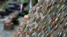 Estos misteriosos árboles de los deseos tienen miles de monedas incrustadas. ¡Cuidado con lo que pides!
