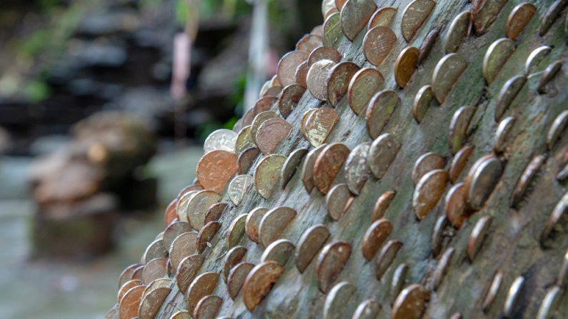 Árbol de los deseos. (Thomas Marchhart/Shutterstock)