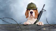 Perrito policía de Perú armado hasta los dientes, arrasa en las redes con su look estilo Rambo