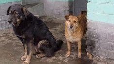 """Comerciante """"obliga"""" a 2 tímidos perritos callejeros a entrar en su local para protegerlos de la lluvia"""