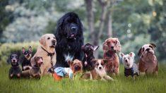 Fallece su perro y el duelo lo inspira para adoptar a 10 peluditos mayores que nadie quería