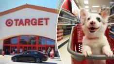 Cachorra de Corgi está super emocionada por su primer visita a la tienda, ¡su reacción no tiene precio!