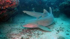 Mujer rescata a un tiburón gato de un metro y medio atrapado en una red de pesca