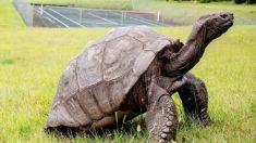 Esta tortuga de 187 años de edad, es el animal terrestre más antiguo del mundo