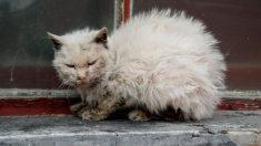 """Nadie quería tocar al """"gato feo"""", un hombre lo hizo y cambió su vida"""