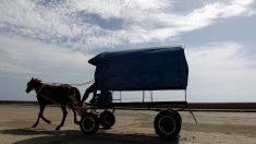 Cuba recurre a caballos y bueyes para paliar su crisis de combustible