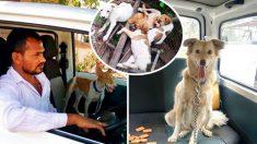 """Indiano economiza dez anos para comprar """"ambulância de animais de estimação"""" e resgatar cães de rua desesperados"""