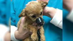 Filhote de cachorro jogado de uma ponte com focinho lacrado 'agradece' ao seu herói por salvá-lo