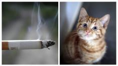 [VIDEO] Jóvenes maltratan a un indefenso gatito obligándolo a fumar