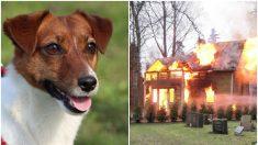 """Perrito muere después de salvar a toda su familia humana de un incendio: """"irá al cielo de los perros"""""""
