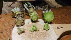 """Confunde wasabi con aguacate y temina en el hospital con """"síndrome del corazón roto"""""""