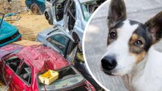 Perrito leal no quiere dejar el auto donde murió su dueño, hasta que alguien lo conquista de nuevo