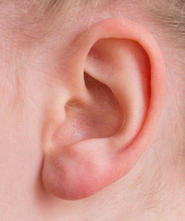 oreja, oído