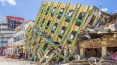Perrito es recordado por su heroico rescate de 7 personas en los escombros del terremoto de Ecuador