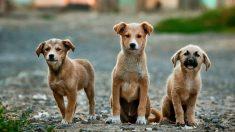 Refugio de animales de Florida envía mascotas hacia Chicago para salvarlas del huracán Dorian