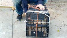 Abandona a su perrito en una estación de autobuses de México porque no le dejaron llevarlo a bordo