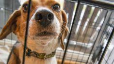 Madre e hijo salvan a más de 1000 perritos de ser sacrificados y los llevan 3000 km a un lugar seguro