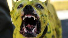 México: Delincuentes atrapan a presunto violador y dejan que un pitbull le destroce los genitales