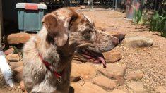 Héroe colombiano arriesga su vida para salvar a perritos tras el incendio en un refugio de animales