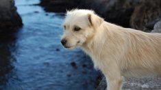 Perrito esperó a sus dueños 4 años en la ruta, cuando finalmente lo encuentran él toma otra decisión