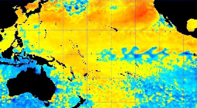 La ola de calor marino que se formó frente a la costa oeste de Norteamérica está actualmente cerca de la zona más cálida del Océano Pacífico. El mapa muestra las anomalías de la temperatura de la superficie del mar con un color naranja más oscuro que representa temperaturas más altas que el promedio. Imagen NOAA.