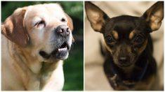 2 perritos que sobreviven bajo los escombros se convierten en esperanza durante un tornado mortal