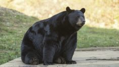 Encontró un oso negro durmiendo en su porch y antes de salir corriendo le tomó una foto viral
