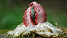 """Capturan extrañas imágenes de """"huevos alienígenas"""" en bosques de Australia y Nueva Zelanda"""