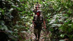 Venezuela se convierte en productor de cocaína bajo las órdenes de Maduro, denuncia ONG