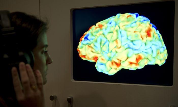 """Una mujer observa una imagen por resonancia magnética funcional (fMRI) que muestra en el cerebro humano el efecto de la Consagración de la Primavera de Stravinsky y la Crítica del Juicio de Kant durante la nueva y principal exposición de la Colección Wellcome """"Cerebro: mente de materia"""" en Londres, el 27 de marzo de 2012. (MIGUEL MEDINA/AFP/Getty Images)"""