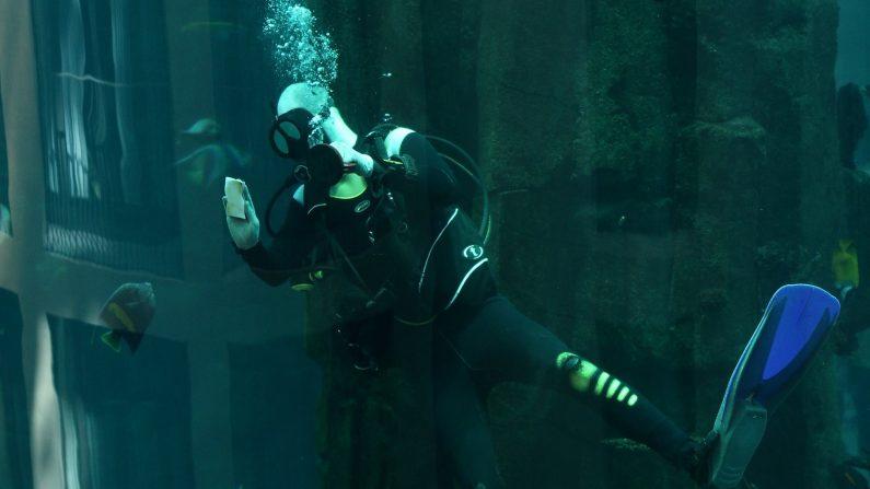 Buzo dentro del acuario en el vestíbulo del SAS Radission Hotel que forma parte de la atracción submarina SeaLife Berlin. (Foto de Sean Gallup/Getty Images)