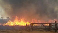 Sem-terra queima floresta para barrar reintegração de posse, afirmam autoridades