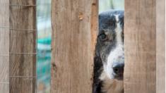 Perrito desolado es abandonado en un refugio luego de que su familia lo cambia por un nuevo cachorro