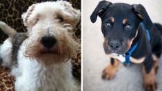 Dos perritos chilenos víctimas de maltrato y abandono luchan por recuperar sus vidas por completo