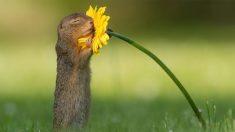 Impresionante foto del momento en que una ardilla huele una flor se vuelve viral