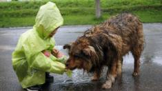 """Niño alimentaba perros callejeros con su mesada y a los 9 años abre su refugio de """"animales felices"""""""